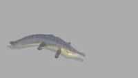 Croc | Idle | 1