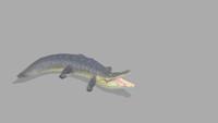 Croc | Idle | 2