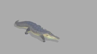 Croc | Jog | 1