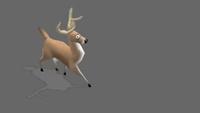 Deer | BIGJog