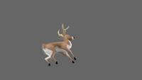Deer | Death | 2