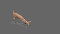 Deer | Graze | 1