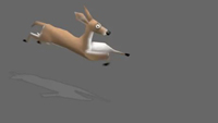 Deer | Run